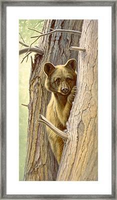 Treed Framed Print by Paul Krapf