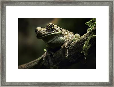 treefrog at night in Amazon rain forest Framed Print by Dirk Ercken