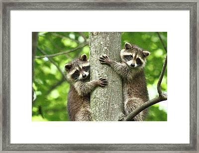 Treehuggers Framed Print by Alina Morozova