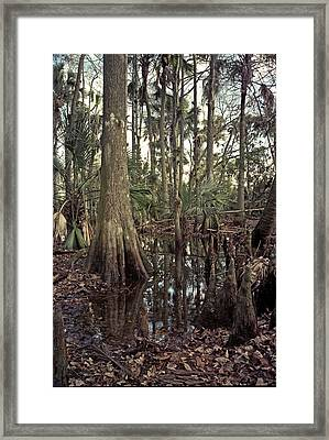 Treeline. Triple N Ranch. Framed Print