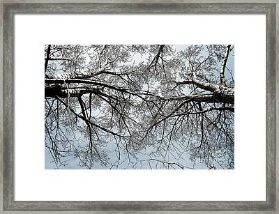 Framed Print featuring the photograph Trees  1 by Minnie Lippiatt