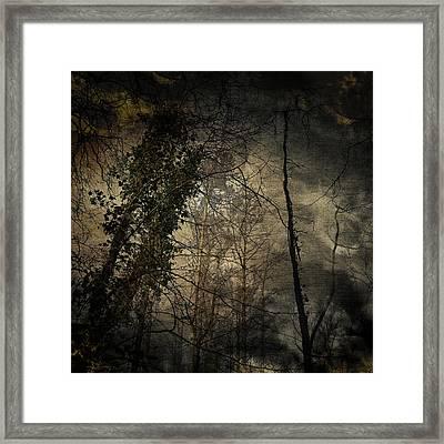 Trees 4 Framed Print