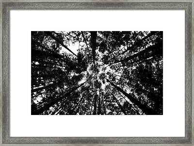 Framed Print featuring the photograph Trees Above Me by Daniel Woodrum