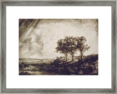 Trees Framed Print by Aged Pixel