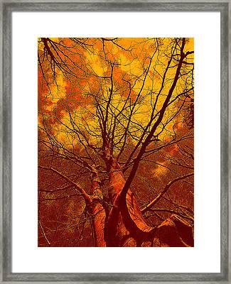 Trees Framed Print by Allen Beilschmidt