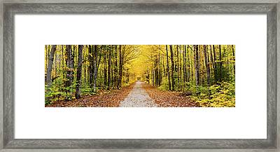 Trees Along A Pathway In Autumn Framed Print by Panoramic Images