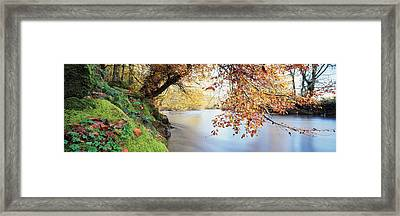 Trees Along A River, River Dart Framed Print by Panoramic Images