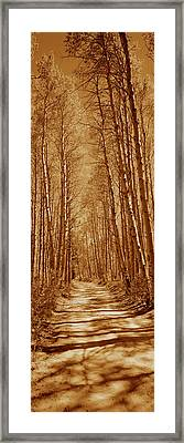 Trees Along A Road, Log Cabin Gold Framed Print by Panoramic Images