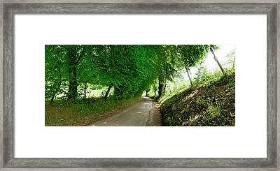 Trees Along A Road Framed Print
