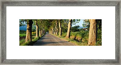 Trees Along A Road, Vaucluse, Provence Framed Print