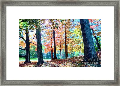 Trees Along The Lyman Estate Framed Print