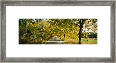 Trees Along The Road, Portugal Framed Print by Panoramic Images