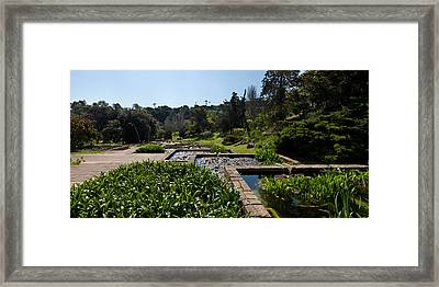 Trees And Aquatic Plants In The Garden Framed Print by Panoramic Images