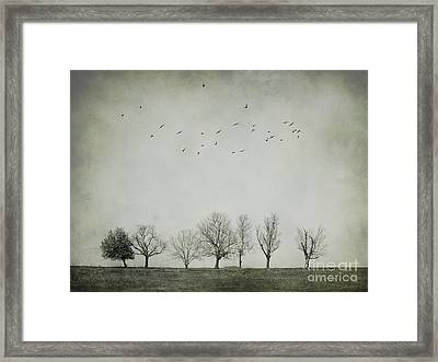 Trees And Birds Framed Print by Diana Kraleva