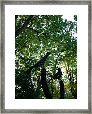 Trees And Black Birds In The Park Framed Print by Chikako Hashimoto Lichnowsky