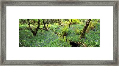 Trees And Bushes In A Forest, Isle Framed Print by Panoramic Images