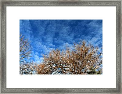 Trees And Clouds Framed Print by Jay Nodianos