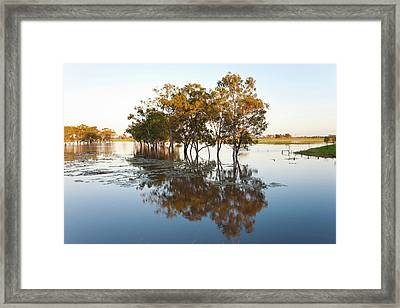 Trees And Flooded Creek Framed Print by Peter Adams