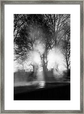 Trees And Fog Framed Print by David Pinsent