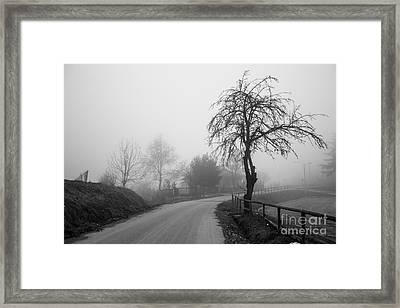 Trees And Fog Framed Print
