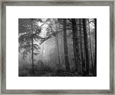 Framed Print featuring the photograph Trees And Fog by Tarey Potter