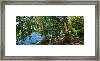 Trees And Footpath Along Alster Lake Framed Print by Panoramic Images