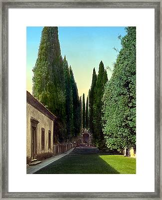 Trees And Grotto Framed Print by Terry Reynoldson