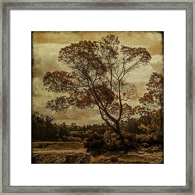 Trees And Hot Sand Framed Print