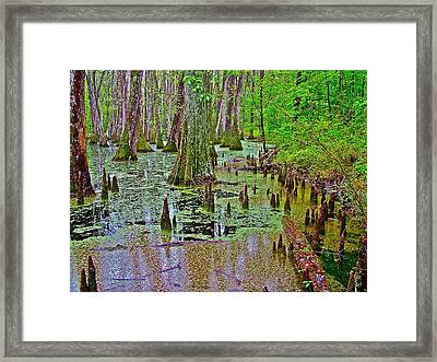 Trees And Knees In Tupelo/cypress Swamp At Mile 122 Of Natchez Trace Parkway-mississippi Framed Print by Ruth Hager