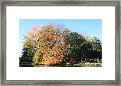 Trees And Lake At Westbury Gardens Framed Print