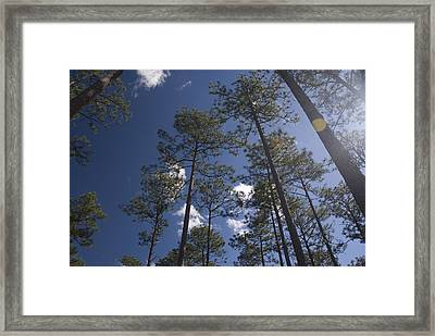 Framed Print featuring the photograph Trees And Nature by Charles Beeler