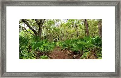Trees And Plants In A Forest, Oscar Framed Print by Panoramic Images