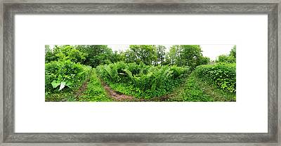 Trees And Plants In A Forest Framed Print by Panoramic Images