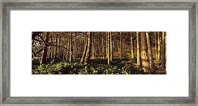Trees And Salals In A Forest At Sunset Framed Print by Panoramic Images