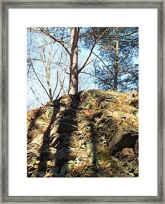 Framed Print featuring the photograph Trees And Shadows by Melissa Stoudt