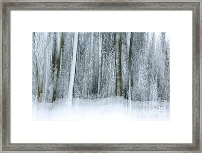 Trees And Snow Abstract Framed Print by David Birchall