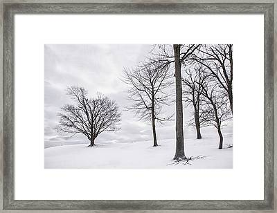 Trees And Snow Framed Print