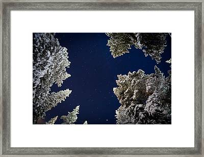 Trees And Stars, Cold Temperatures Framed Print by Panoramic Images