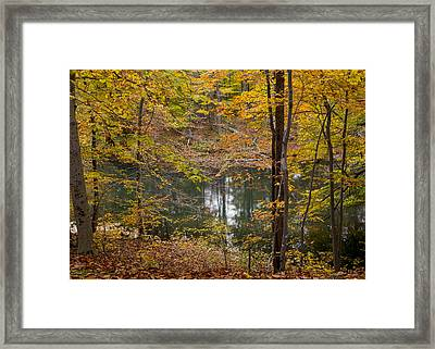 Trees And Water  Framed Print by Tim Fitzwater