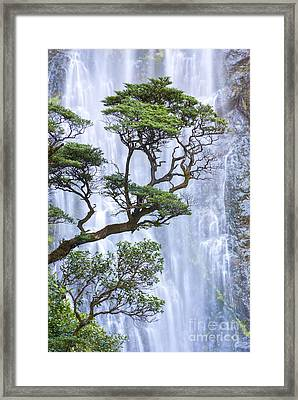 Trees And Waterfall Framed Print