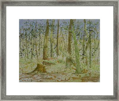 Trees Around Newhalem Campground Framed Print