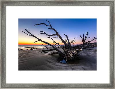 Trees At Driftwood Beach Framed Print by Debra and Dave Vanderlaan