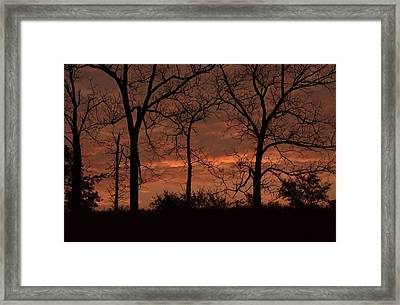 Trees At Sunrise Framed Print