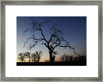 Trees At Sunrise Framed Print by Robert Woodward