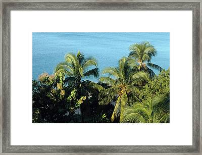 Trees At The Beach Framed Print