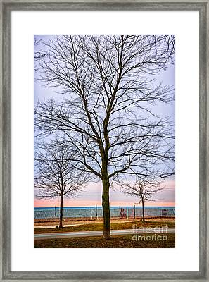 Trees At The Boardwalk In Toronto Framed Print by Elena Elisseeva