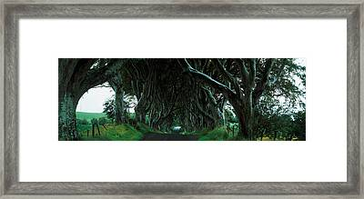 Trees At The Dark Hedges, Armoy, County Framed Print by Panoramic Images