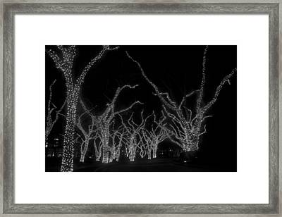 Framed Print featuring the photograph Trees Bejeweled by Jim Snyder