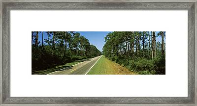 Trees Both Sides Of A Road, Route 98 Framed Print by Panoramic Images