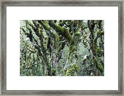 Trees Covered With Moss And Frost, New Framed Print by Matteo Colombo